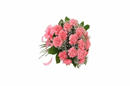 12 Pink Carnations Hand Bunch