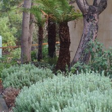 Ferns and Lavender