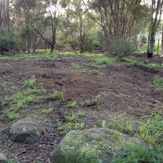 Early Days Natives & Wattle Bank