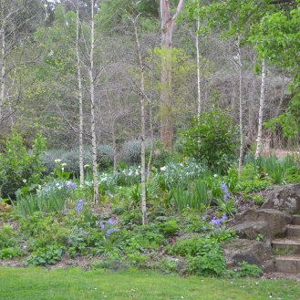 Birch Forest with Underplanting