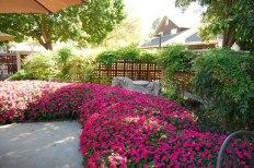 pub_garden