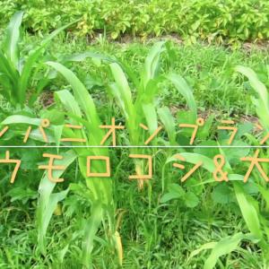 companion-plants01
