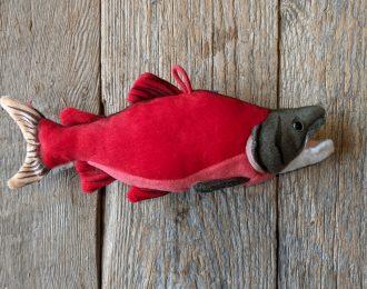 Sockeye Salmon by OceanWise