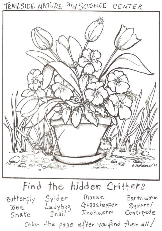 Hidden Creatures 4.15.2020
