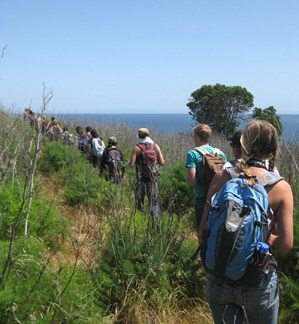 Checking out invasive fennel on Santa Cruz Island before research project. Image courtesy Hilary Walecka
