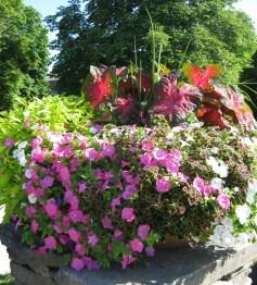 UConn flowers 026