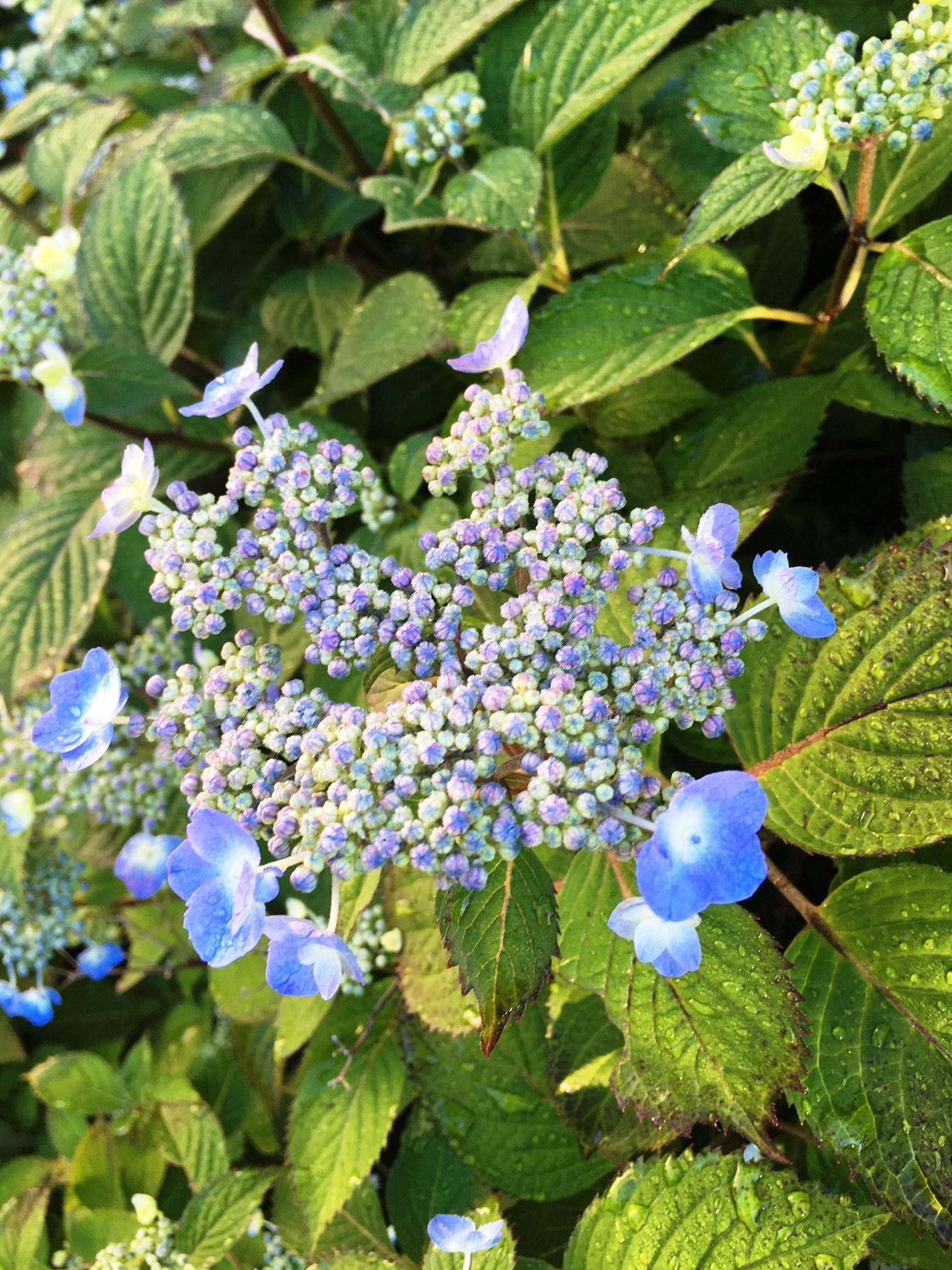 Https Uconnladybug Wordpress Com 2020 05 01 May Wildflowers