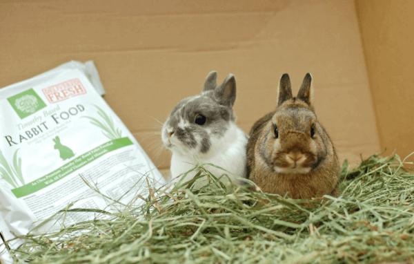cara merawat kelinci anggora