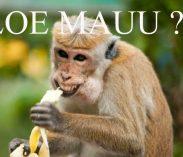 44 Gambar Hewan Lucu Bahasa Jawa Gratis