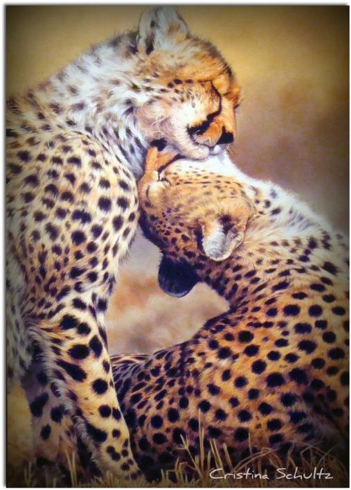 Любовь гепардов. Фото