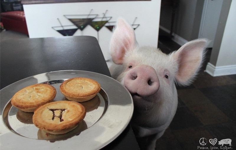 нужно картинки про свинок и еду машин построят