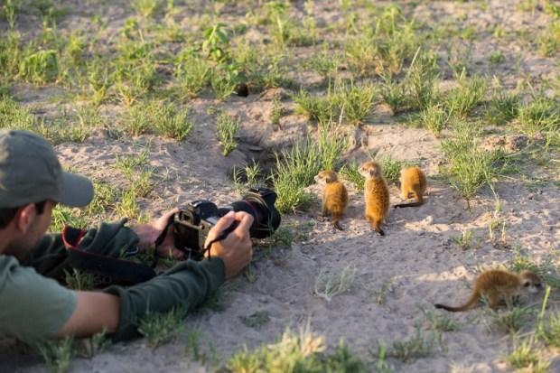Необычная дружба между фотографом и сурикатами. Фото