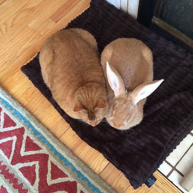 Кролик Уоллес и кот Гас – лучшие друзья. Фото