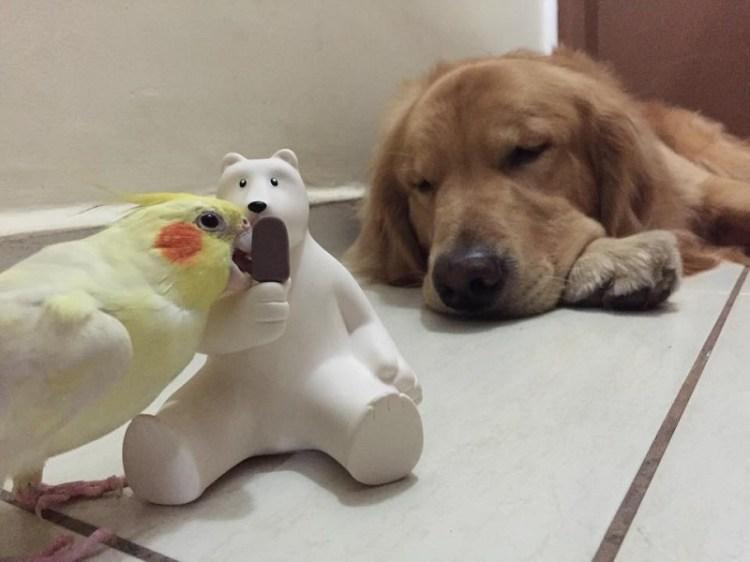 Ретривер Боб и его друзья – звезды Инстаграма. Фото