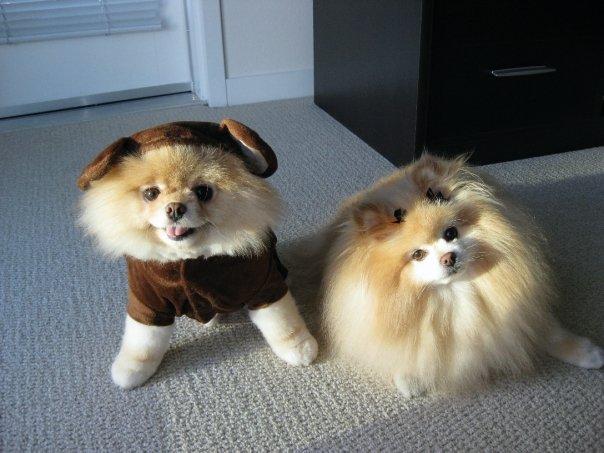 Наряженный щенок Бу с подружкой. Фото