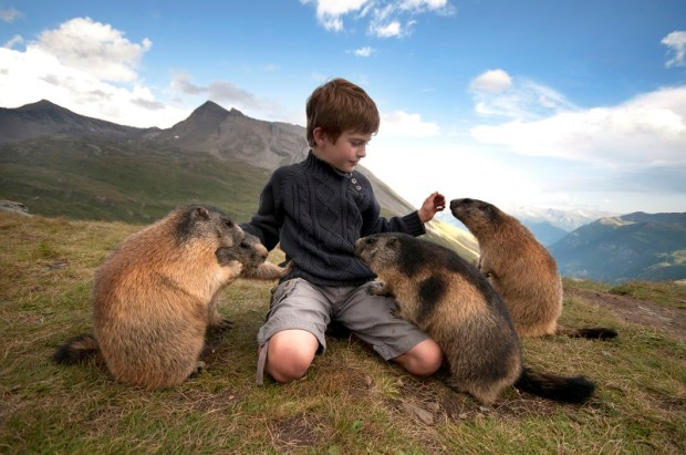 Удивительная дружба мальчика с альпийскими сурками. Фото