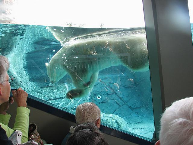 Бассейн с белыми медведями. Кокрэйн. Фото
