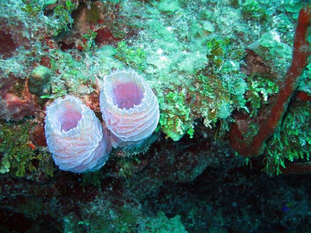 Лайтхауз-риф. Кораллы. Фото