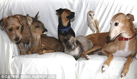 Дружба животных. Собаки, олененок, кролик и сова