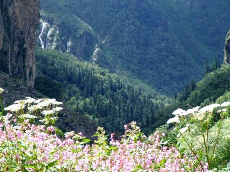 Долина Цветов в Гималаях. Фото