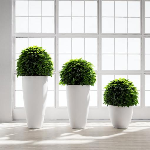 Chocofur_Green_Ball_Plants