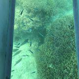 【抜群の透明感】南城市奥武島のグラスボートで沖縄の魚を探そう!