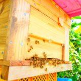 上原養蜂はじめます。