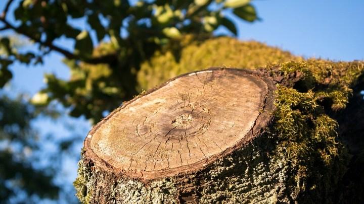 Holzernte in der Försterei Bobenwald