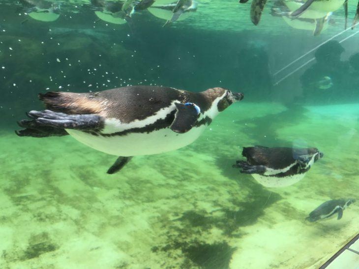 夏休みの葛西臨海水族園(第3話)待望のペンギンさんとご対面!