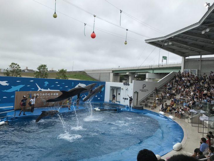 夏休みの仙台うみの杜水族館(第5話)「オタリオ」のショーを「ゴマフアザラシ」が心配そうに見つめているシーンに、ちょっとほっこり