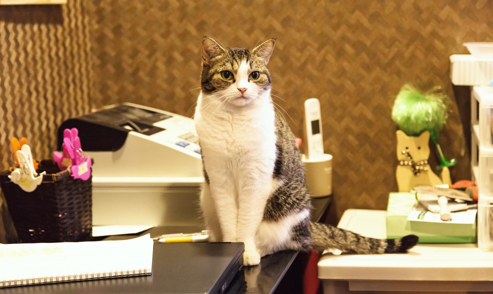 猫カフェって意味ある?って言われた時の、目からウロコが落ちた気持ち。