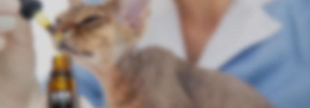 Terapia con cannabis medicinal en medicina veterinaria: experiencias clínicas (VET0110)