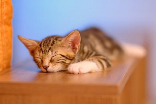 ¿Cuánto duermen los animales?