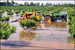 peach flooding1
