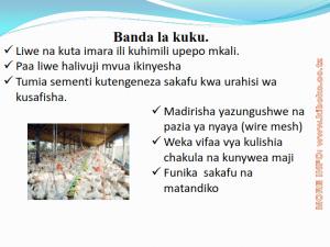 chicken management swahili_004