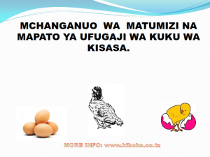 chicken management swahili 008 - Ufugaji wa kuku kwa njia ya kisasa
