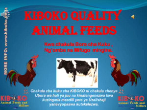 chicken management swahili 001 300x225 - Ufugaji wa kuku: Namna ya kuanza na mchanganuo wa mapato na matumizi