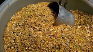 Chicken Feed - Epuka kufanya makosa wakati wa kutunza chakula cha kuku