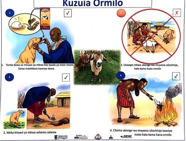 Ormilo 2. - ORMILO (Coenurus cerebralis), UGONJWA UNAOSUMBUA WAFUGAJI WA MBUZI NA KONDOO NCHINI