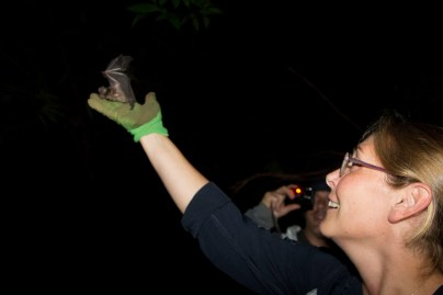 Naturalist Sandy Neps releases a bat after identification.