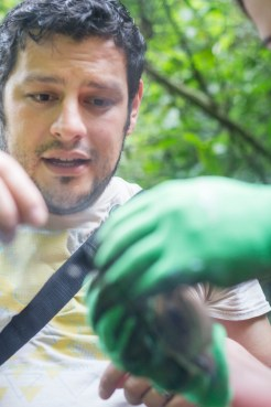 Head Naturalist Arturo offers directions to remove the bird from the net.