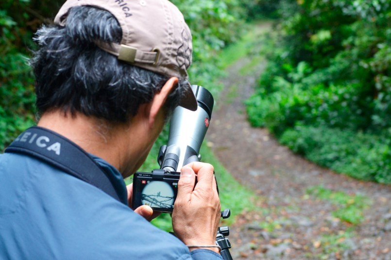 Russ Kumai snaps a picture of the magenta-throated woodstar.
