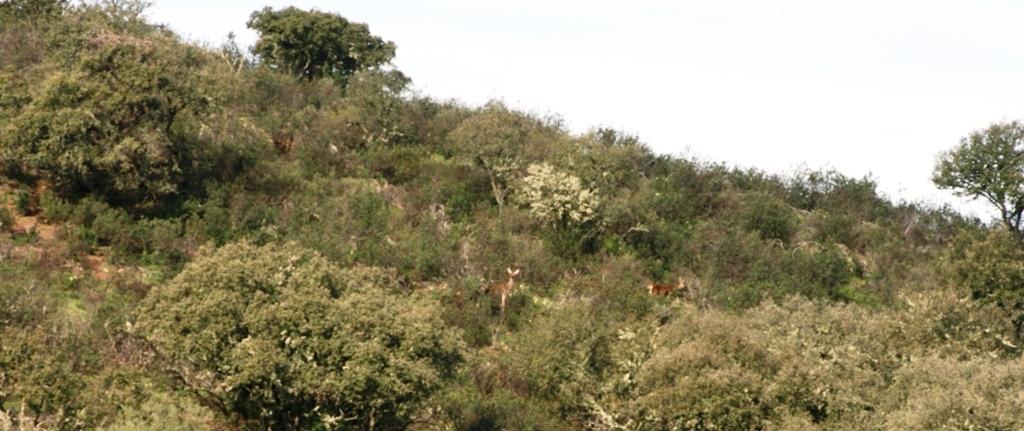Iberian Red Deer near Ladoeiro, Portugal