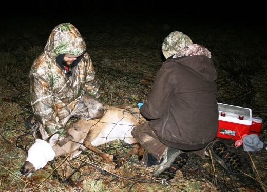 Deer in Net 1