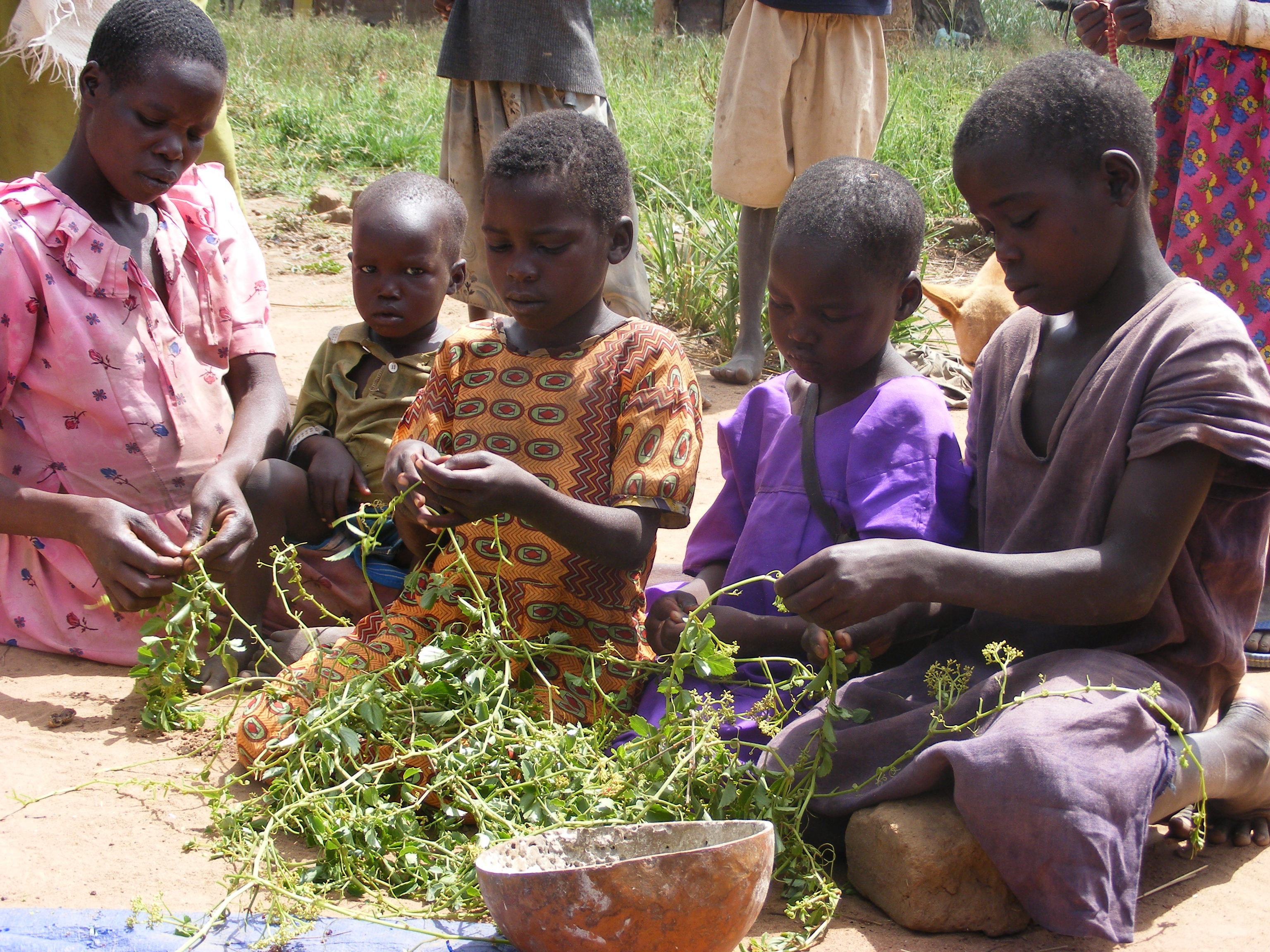 Children in Katakwi collect some vegitables. The area has been hit by famine. John Njoroge Photo