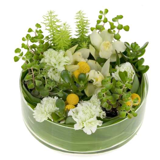 Your Dish Garden