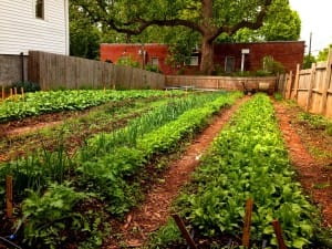 Chef Jay Swift's Garden