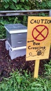 The Georgia Tech Urban Bee Project