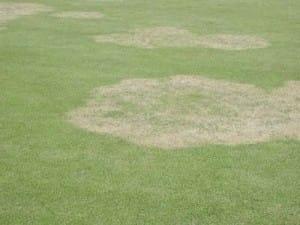 Large patch disease - Alfredo Martinez, UGA