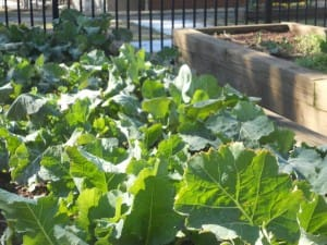 Garden chores in september and october